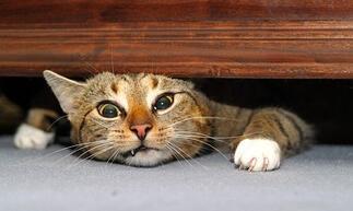 Stuck_Cat